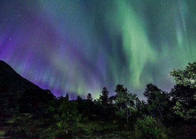Aurora over trees