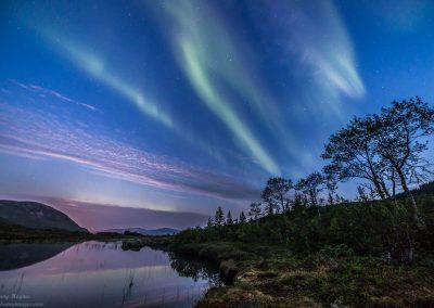 Trees under auroras